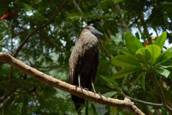 Exotischer Vogel im Palmitos-Park (Gran Canaria)