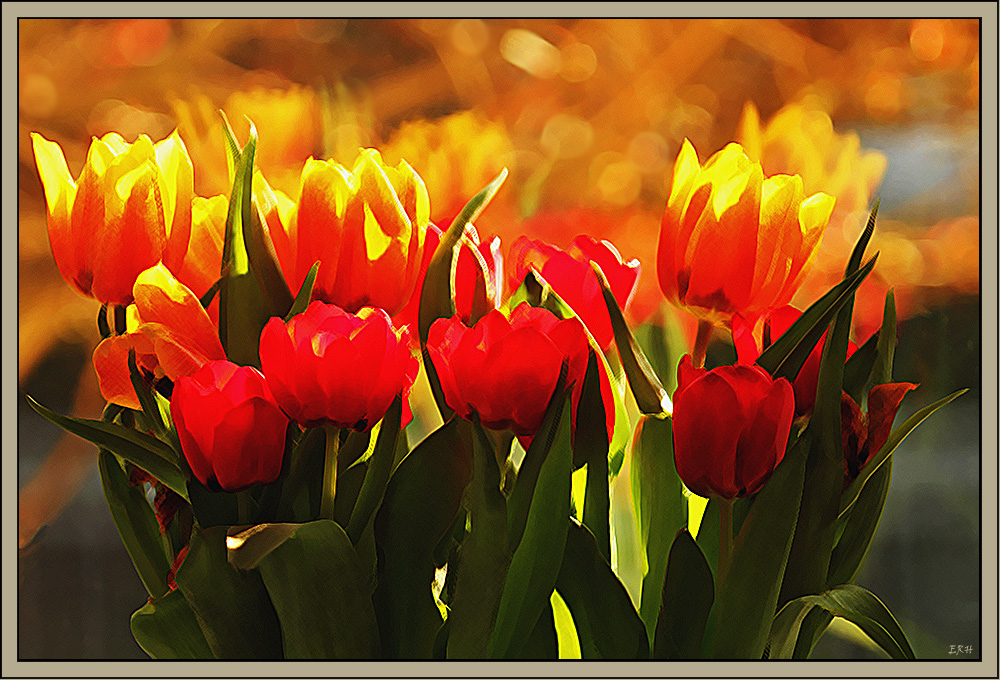 Experiment mit Tulpen