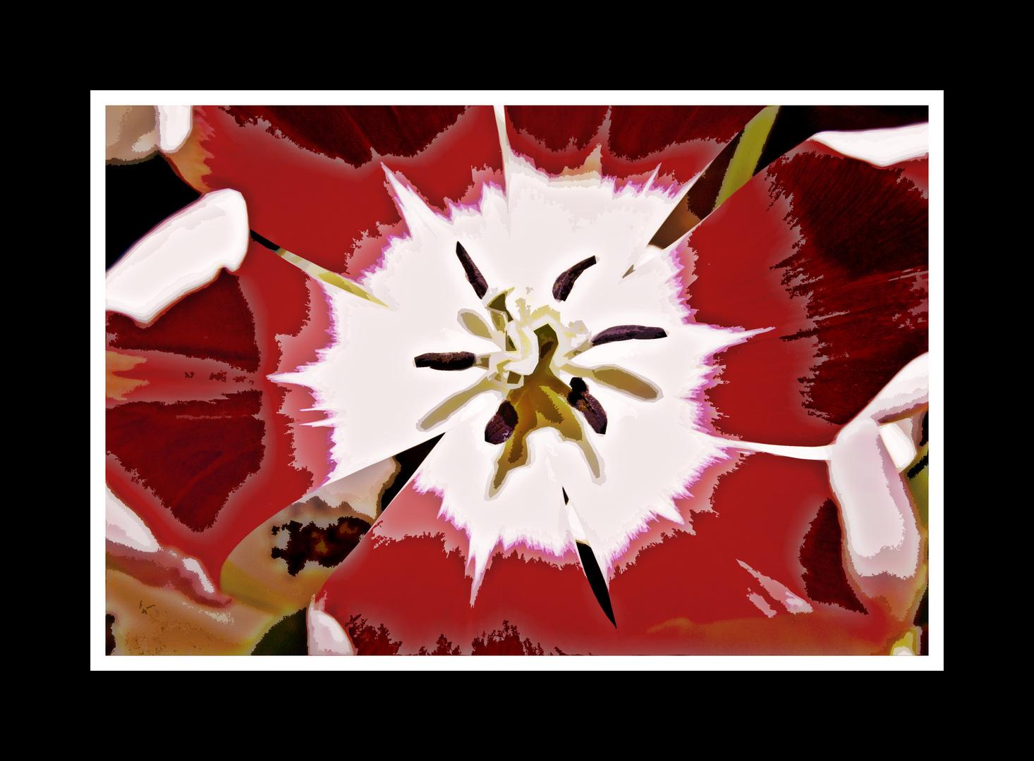 experimentant amb el tulipà