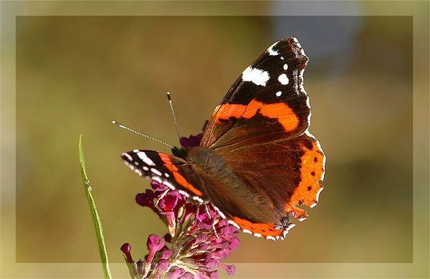 Experimente am lebenden Objekt - oder Schmetterling halt still