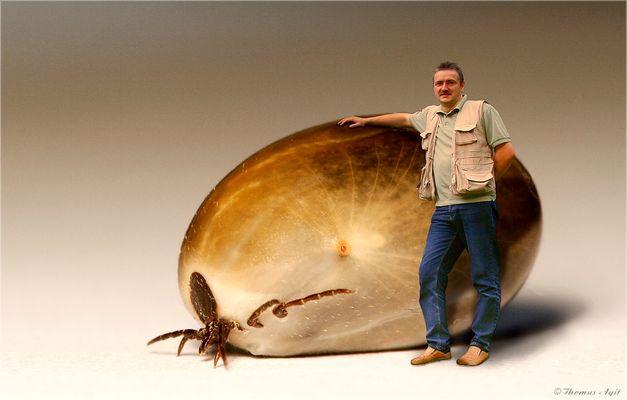 Experten befürchten eine Zeckenplage...