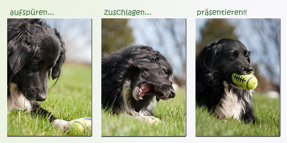 Expertenfrage: wie suchen Hunde eigentlich Ostereier?