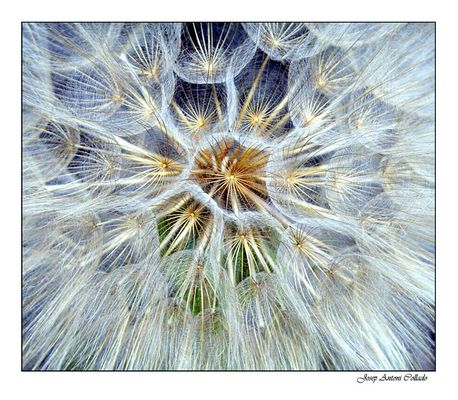 Explosió de Natura -- Explosion of Nature