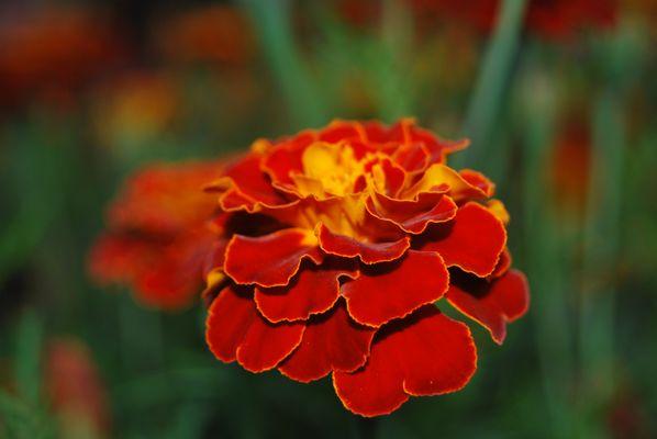 explosion de rouge et orange