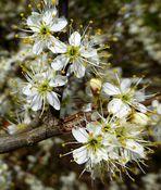 Explosion der Mini-Blüten