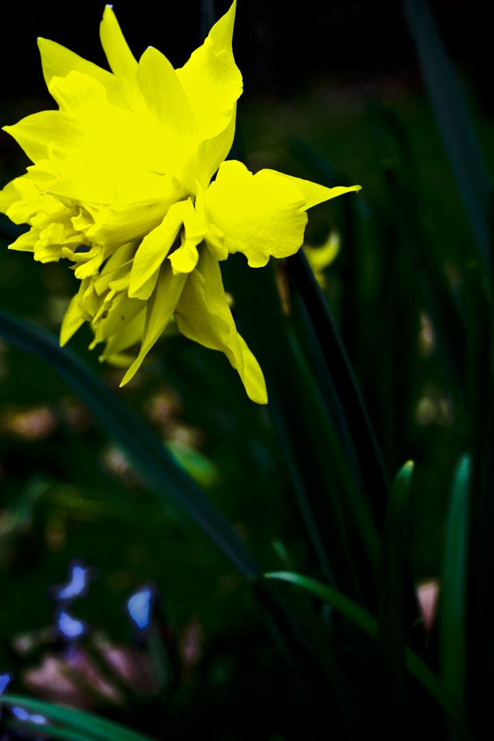 Explosion des Frühlings
