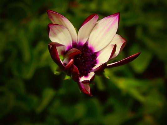 Explosion en plein coeur d'une fleur