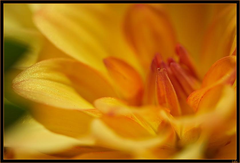 Explosion jaune