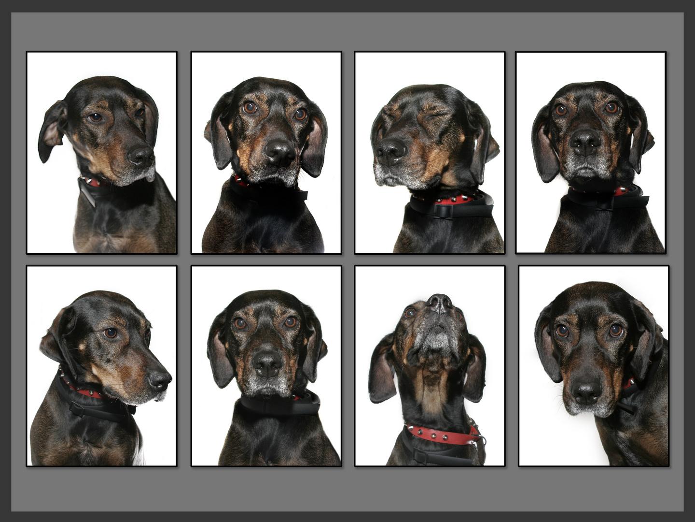 Expresión canina
