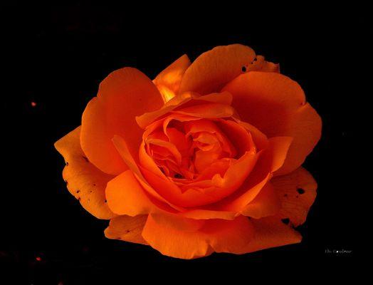 Expression florale -2