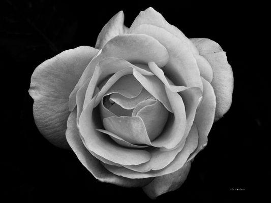 Expression florale