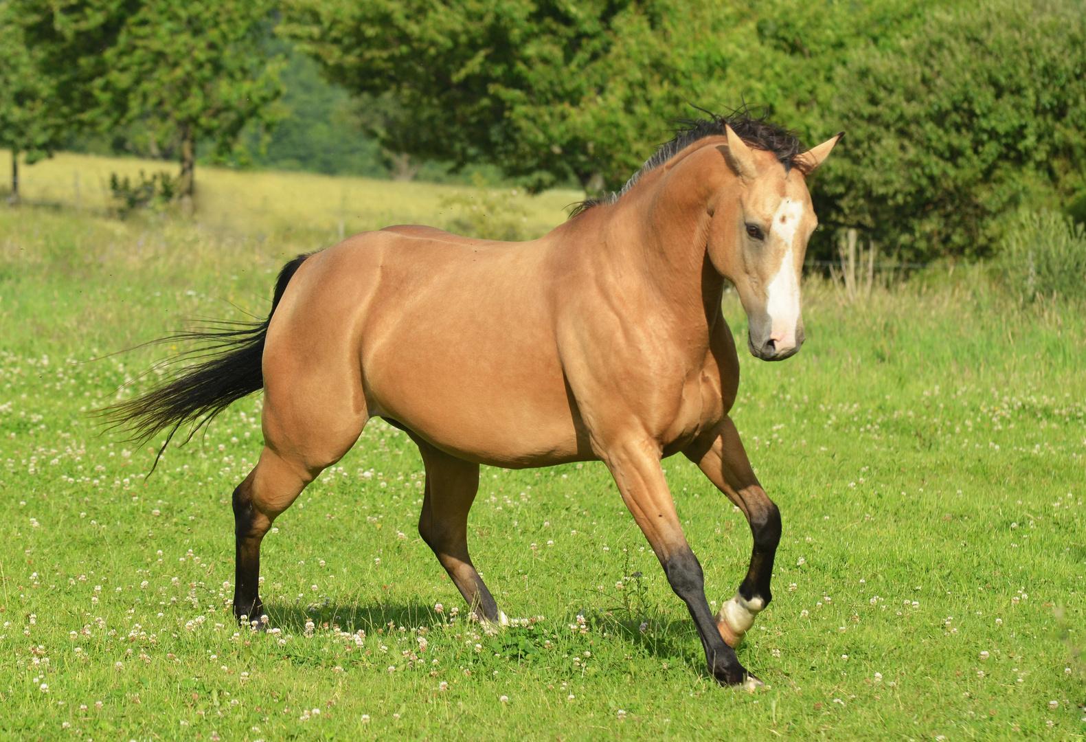 Expressive Quarter Horse