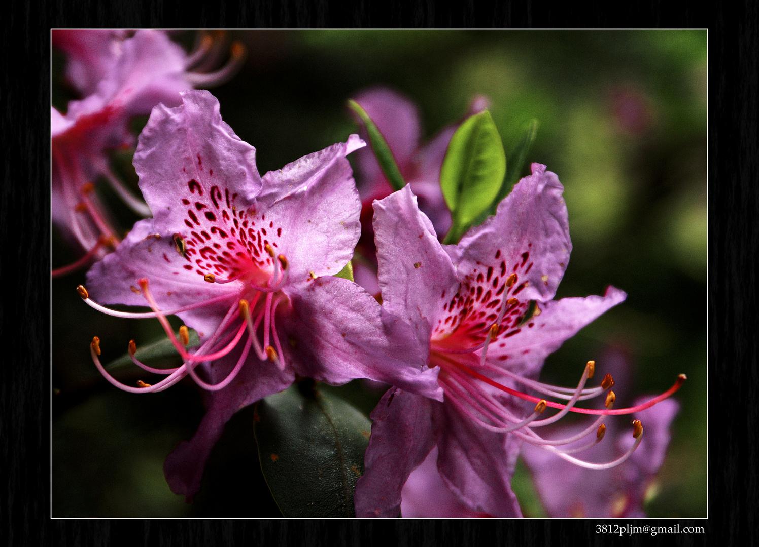 Extensiones florales