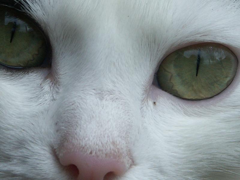 Eye cat cher