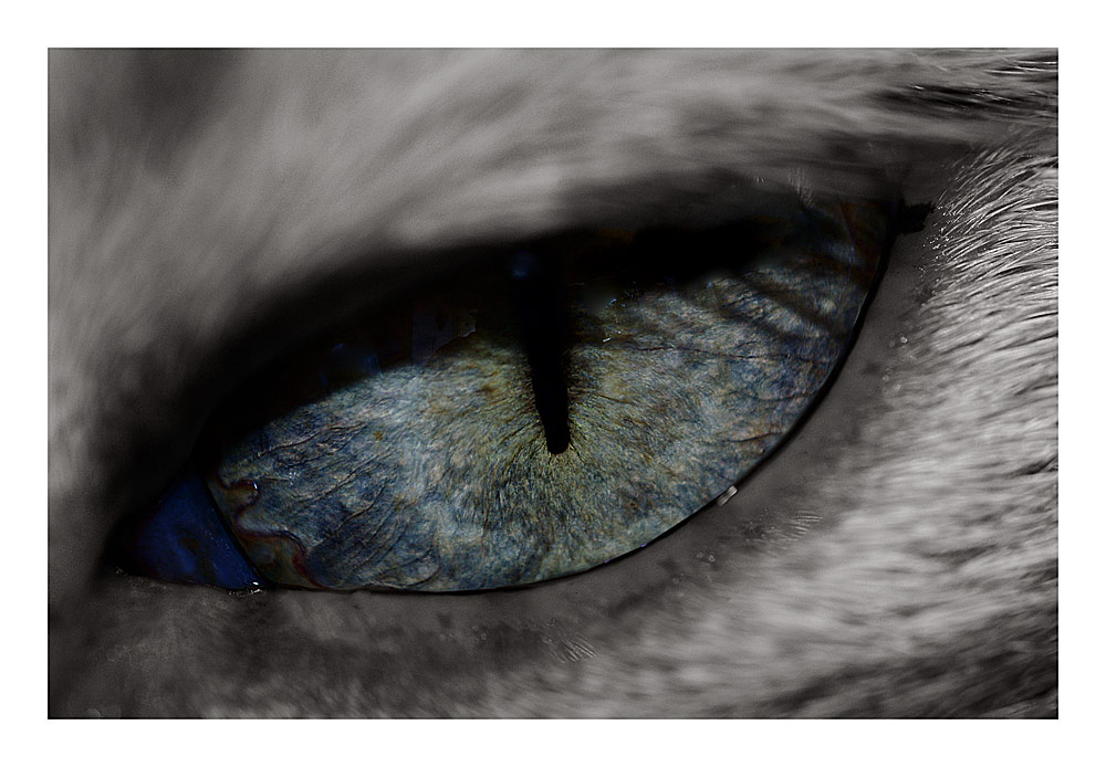 eye-cat'cher