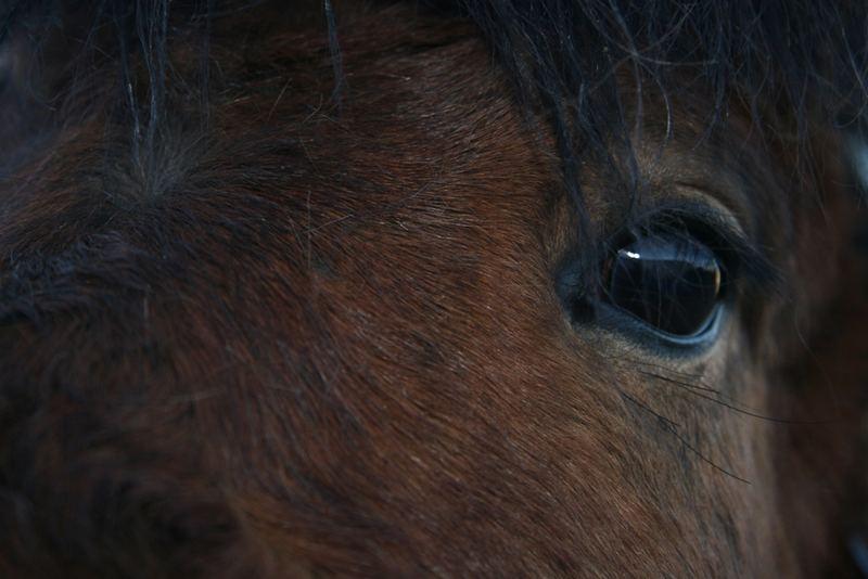 Eye of Félagi