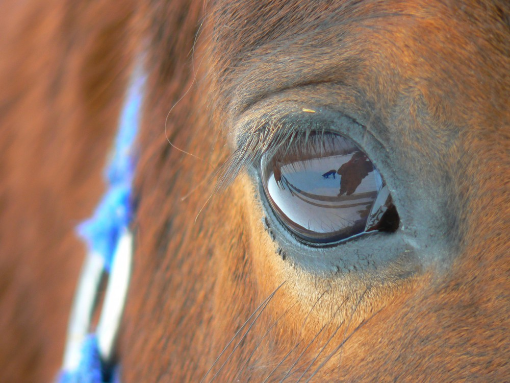 Eye of my mare