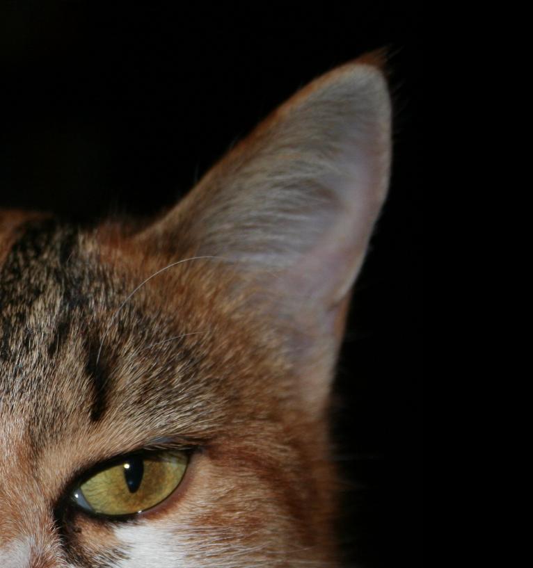 Eye of my Tiger