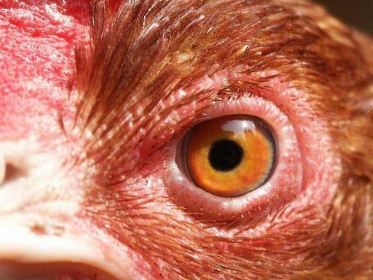 Eye Of The Henne
