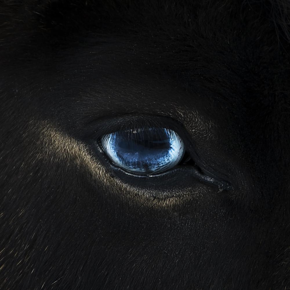 eye of the pony