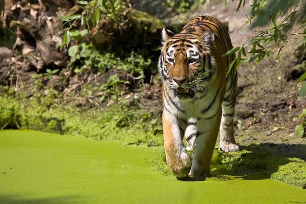 eye of the tiger II