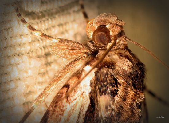 Eye to Eye with a Moth.....