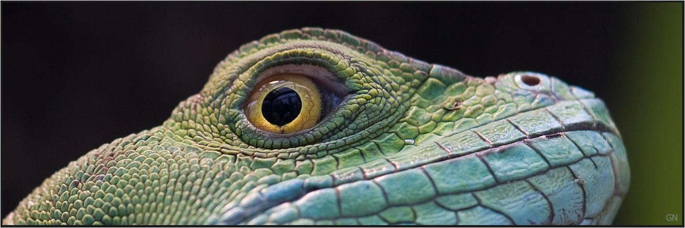 Eye  Watching