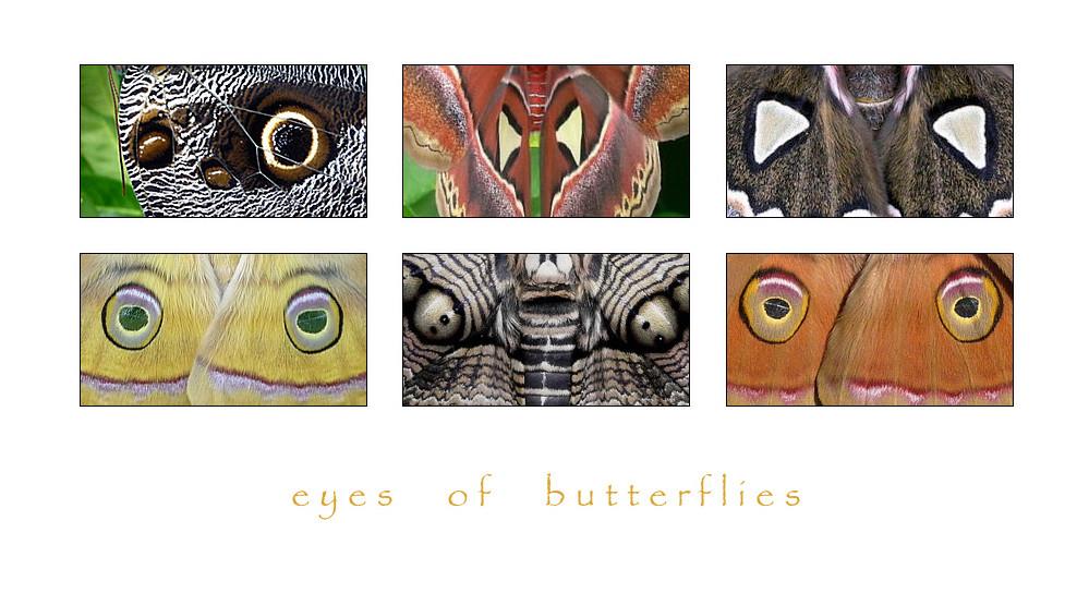 . eyes of butterflies 2 .