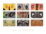 .eyes of butterflies.