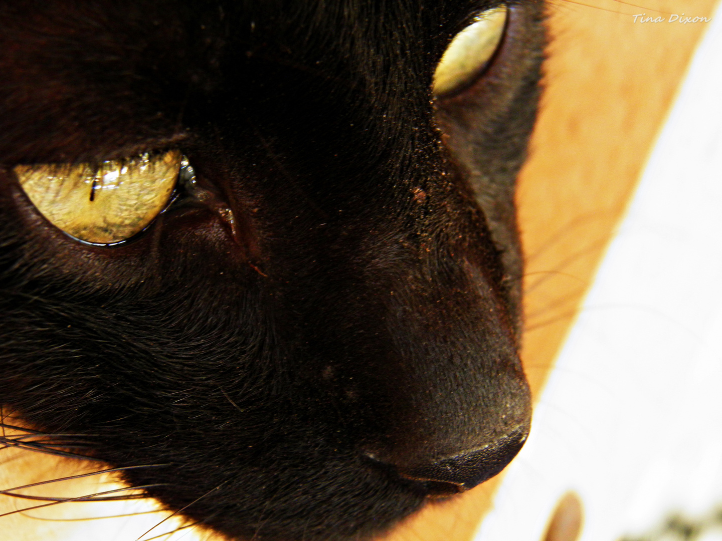 eyes of the panther