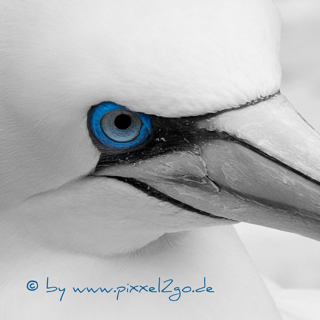 Eyeshot blue .....