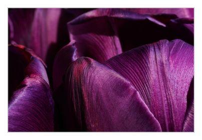 Violett / Lila