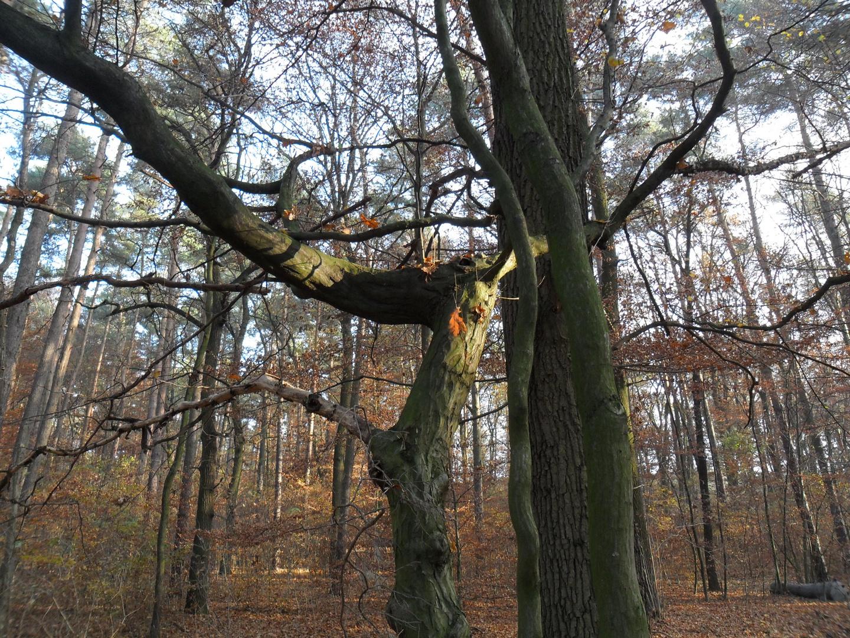 Fabelwesen im Wald