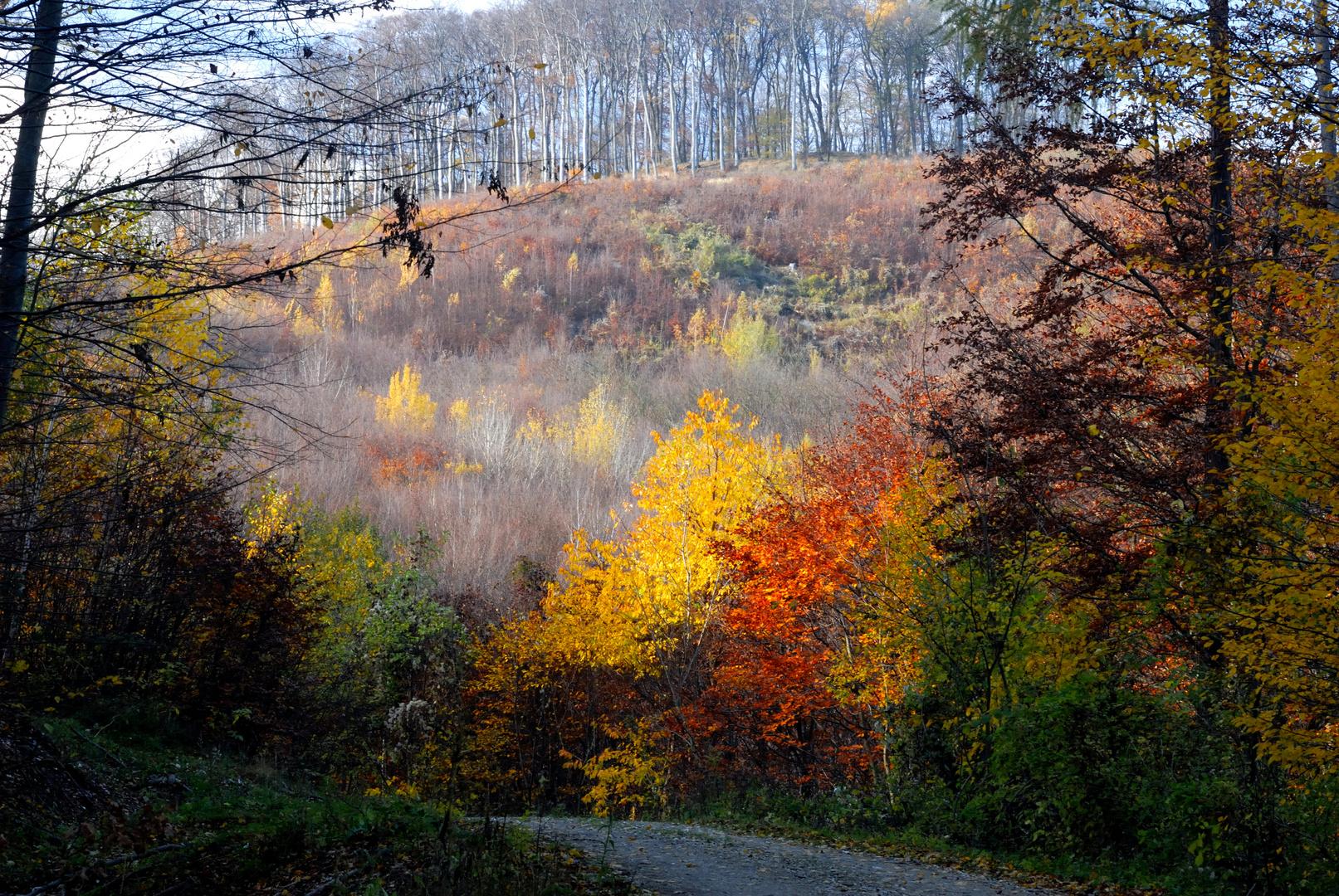 Fabenrausch im Herbst