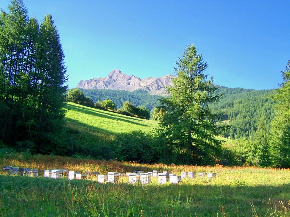 face au sommet Bucher, le petit rucher (05)