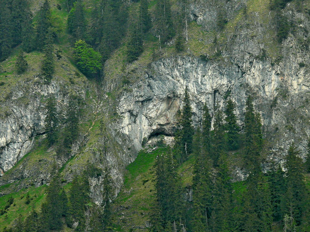 Face of the Natur