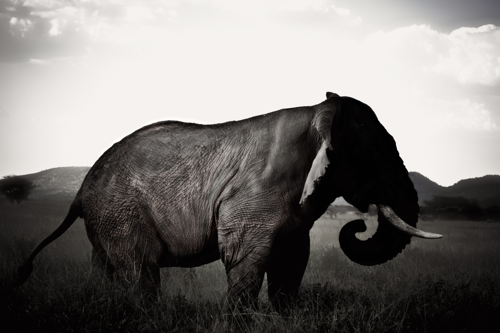 Faceless Elephant