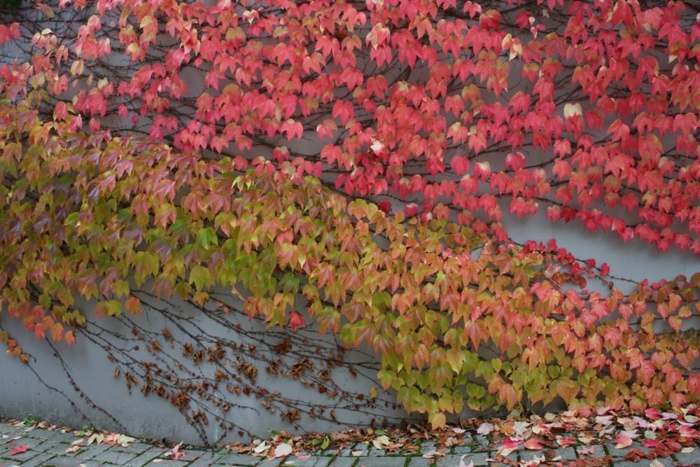 Facetten des Herbstes