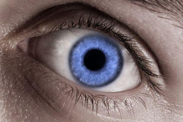 Facharbeit: Das menschliche Auge