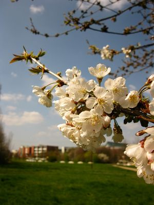 Faculté en Fleurs