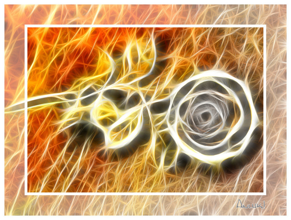 Fadenschein-Rose !