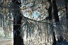 Fadenvorhang im Winter
