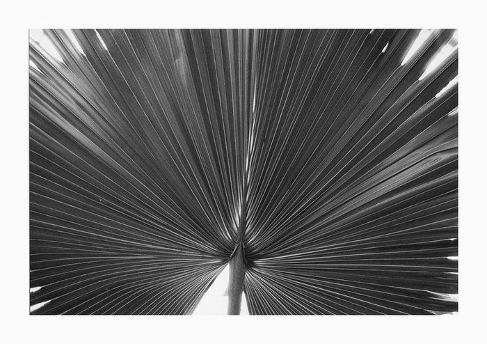 Fächersymmetrie