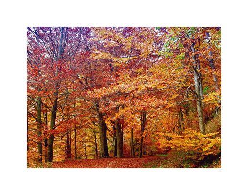 faggi d'autunno
