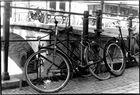 Fahräder in Amsterdam