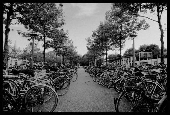 Fahrrad Friedhof