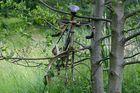 Fahrradbaum !?