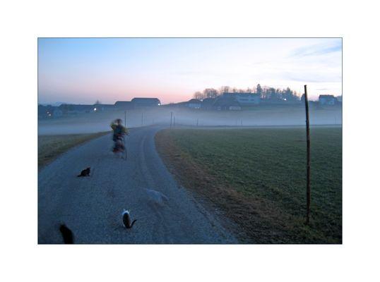 fahrradjunge und katzen