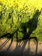 Fahrradtour am Nord-Ostseekanal
