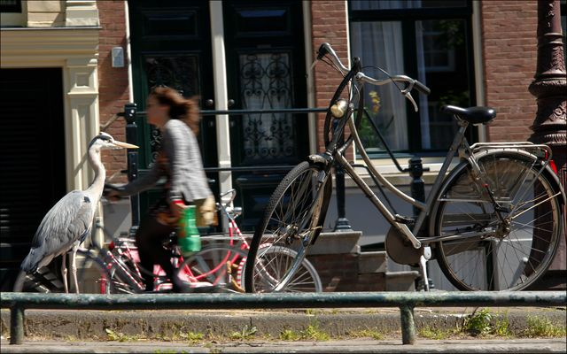 Fahrräder in Amsterdam 2